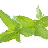 Menta piperita foglie - prezzo per 100 g