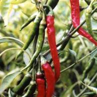 Peperoncino Cayenna Frutti - prezzo per 100 g