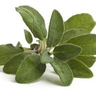 Salvia officinale foglie - prezzo per 100 g